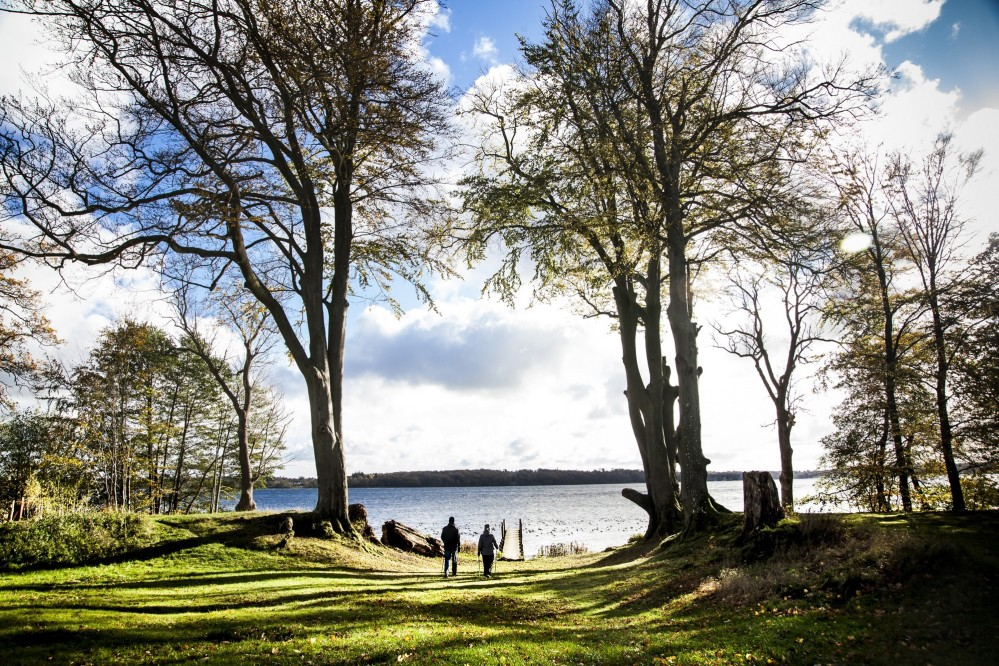 """An alley of beautiful old trees, called """"The Queen's Beeches,"""" runs from Lake Esrum and was planted in the early 18th century by King Frederick IV. – © Sune Magyar / Parforcejagtlandskabet i Nordsjælland"""