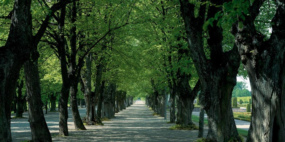 The garden has an outer frame of four linden tree-lined avenues. The oldest lindens are from Hedvig Eleonora's time. – © Åke Eson Lindman