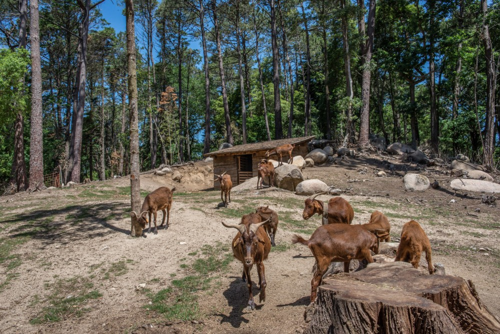 Around the Stables, there are pens for farm animals and a meadow with picnic and rest areas. – © PSML / Jonas Tavares
