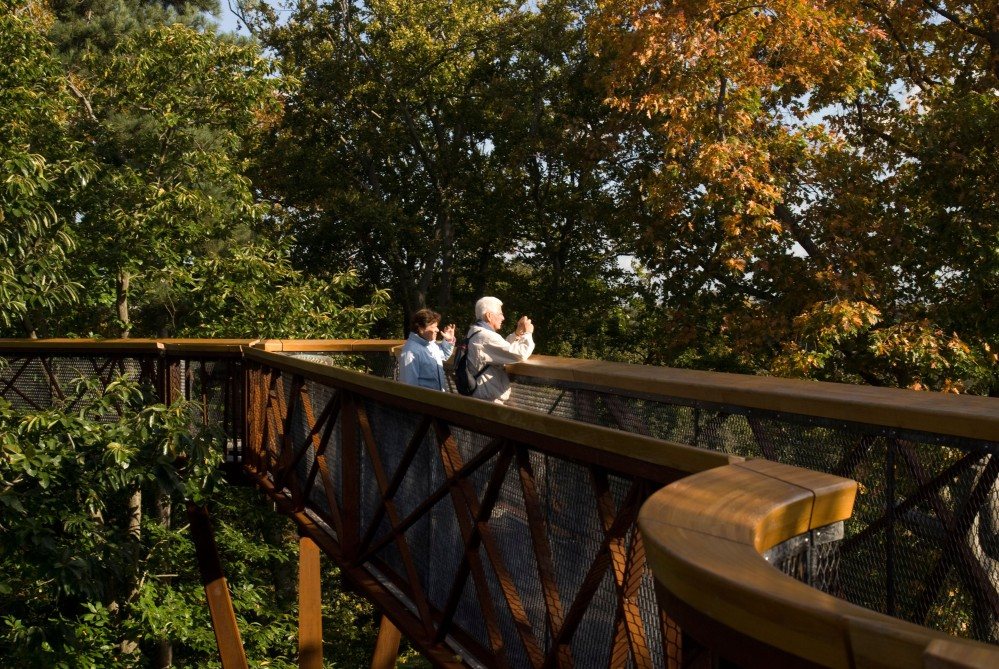 The Treetop Walkway offers visitors a rare insight into the ecosystem of the forest canopy teeming with birds, insects, lichens and fungi. – © RBG Kew