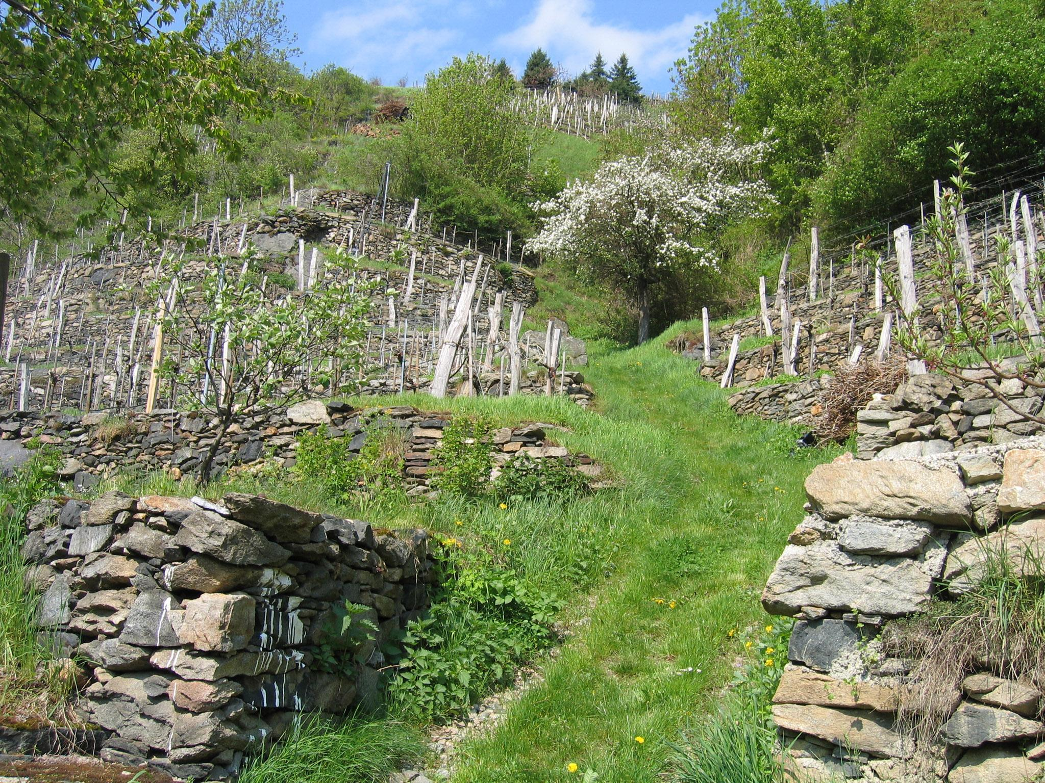 Some of the drystone wall vineyard terraces have been kept in situ for more than 1,000 years. – © Michael Schimek