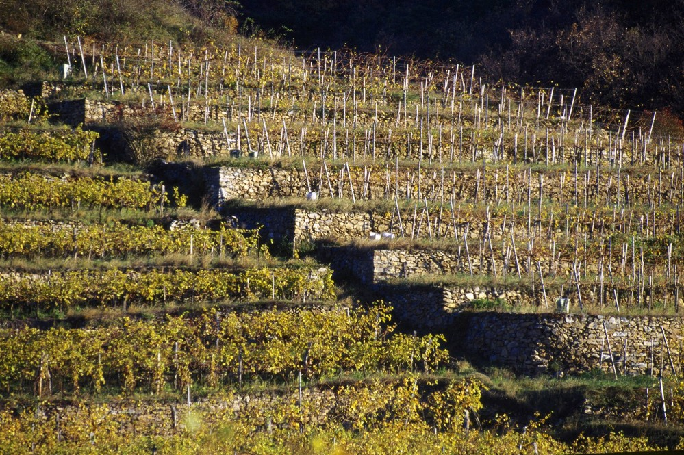 More than 60 percent of the vineyard acreage in the Wachau is on terraces of dry stone walls, many of which date back more than a thousand years. – © Gregor Semrad