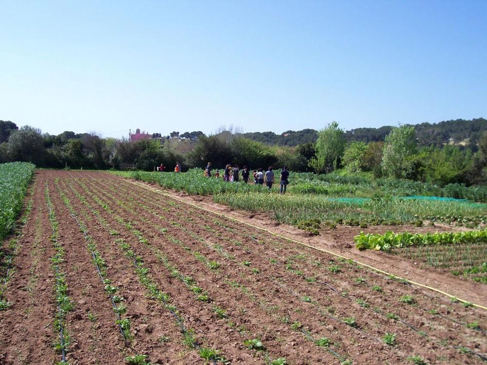 Des activités liées à l'agriculture écologique, les plantes aromatiques et les énergies renouvelables. – © Hort de la Sínia
