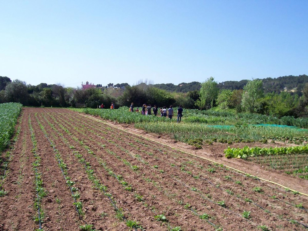 Activities related to ecological agriculture, aromatic plants, renewable energies. – © Hort de la Sínia