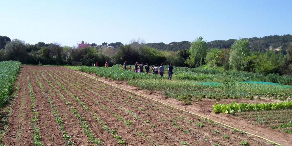 Activities related to ecological agriculture, aromatic plants, renewable energies. – © Hort de la Sínia