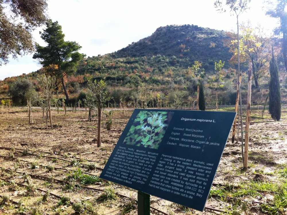 Informative panels can be found for every plant species in the Olympic Botanical Garden. – © Hellenic Ministry of Culture and Sports / Ephorate of Antiquities of Ilia