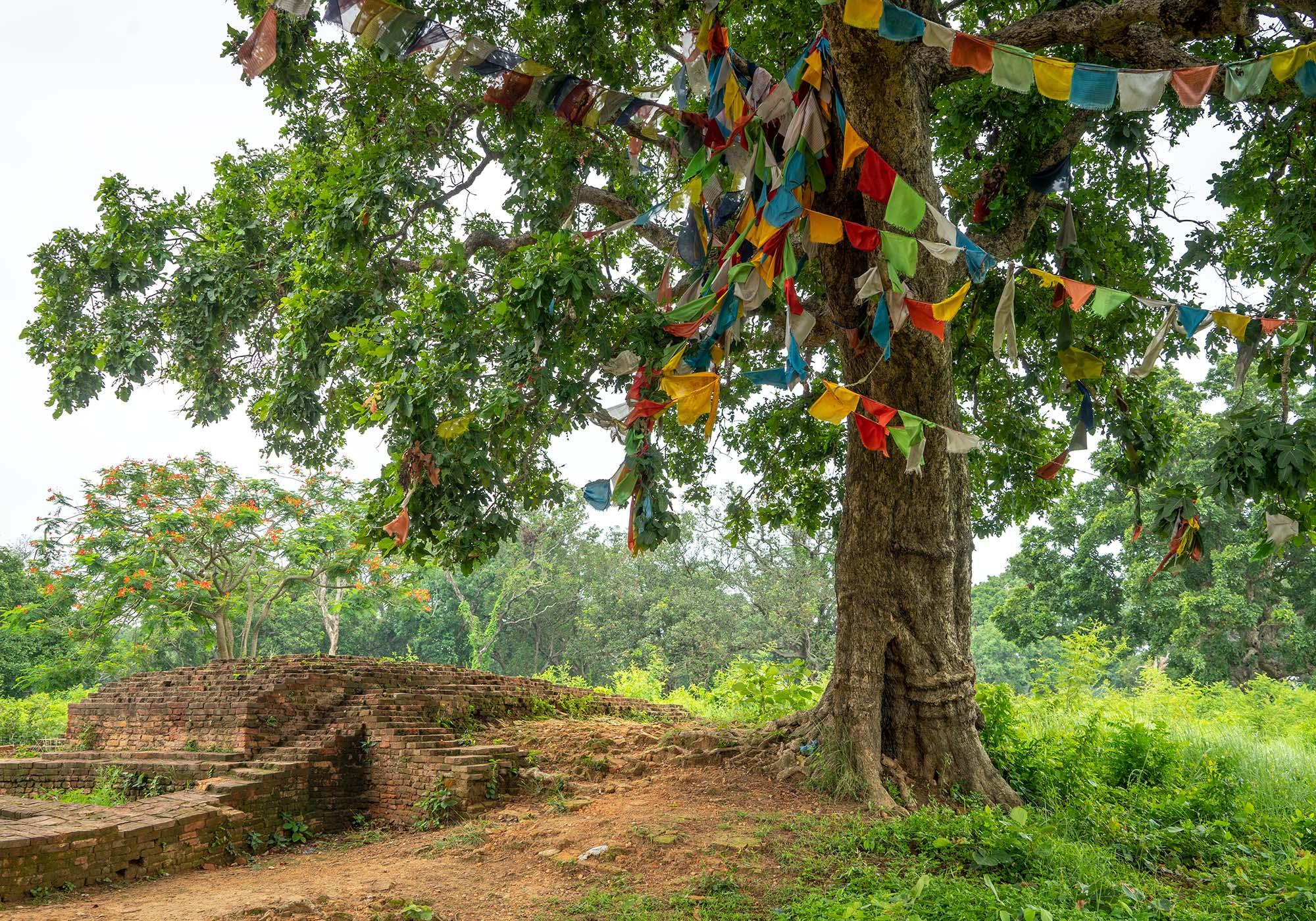 The archaeological site of the Ancient City of Kapilavastu, where Buddha spent his childhood and left at the age of 29 on his path to enlightenment. – © Michael Turtle