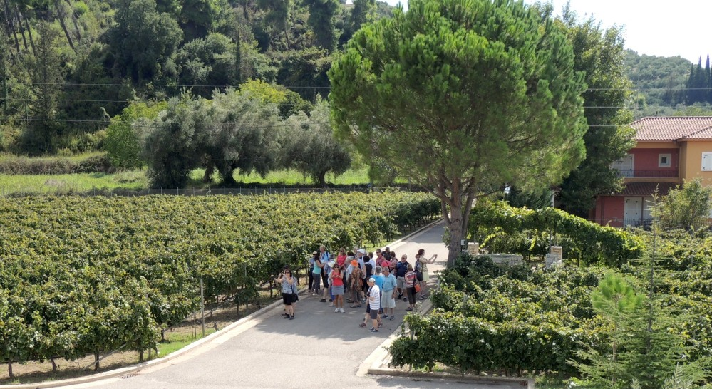 A tour at the vineyards of the Olympia Land Estate – © Olympia Land Estate