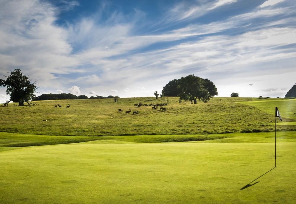 Play a game of golf while the red and fallow deer graze only a few feet away. – © Sune Magyar / Parforcejagtlandskabet i Nordsjælland