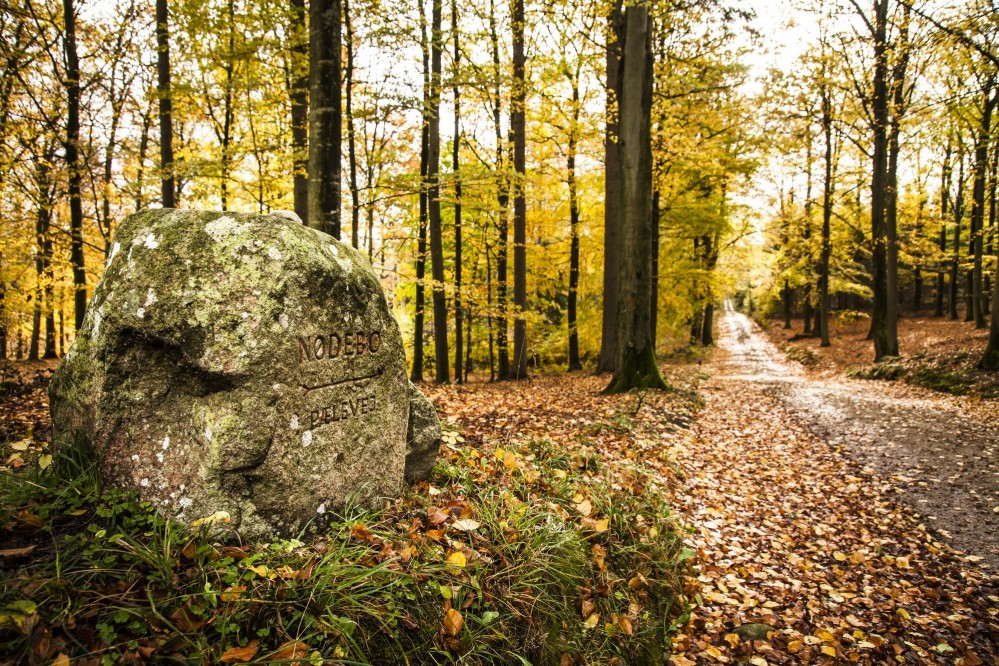 Visitors easily explore the Gribskov Forest by following the clearly marked stones  placed at junctions. – © Sune Magyar / Parforcejagtlandskabet i Nordsjælland