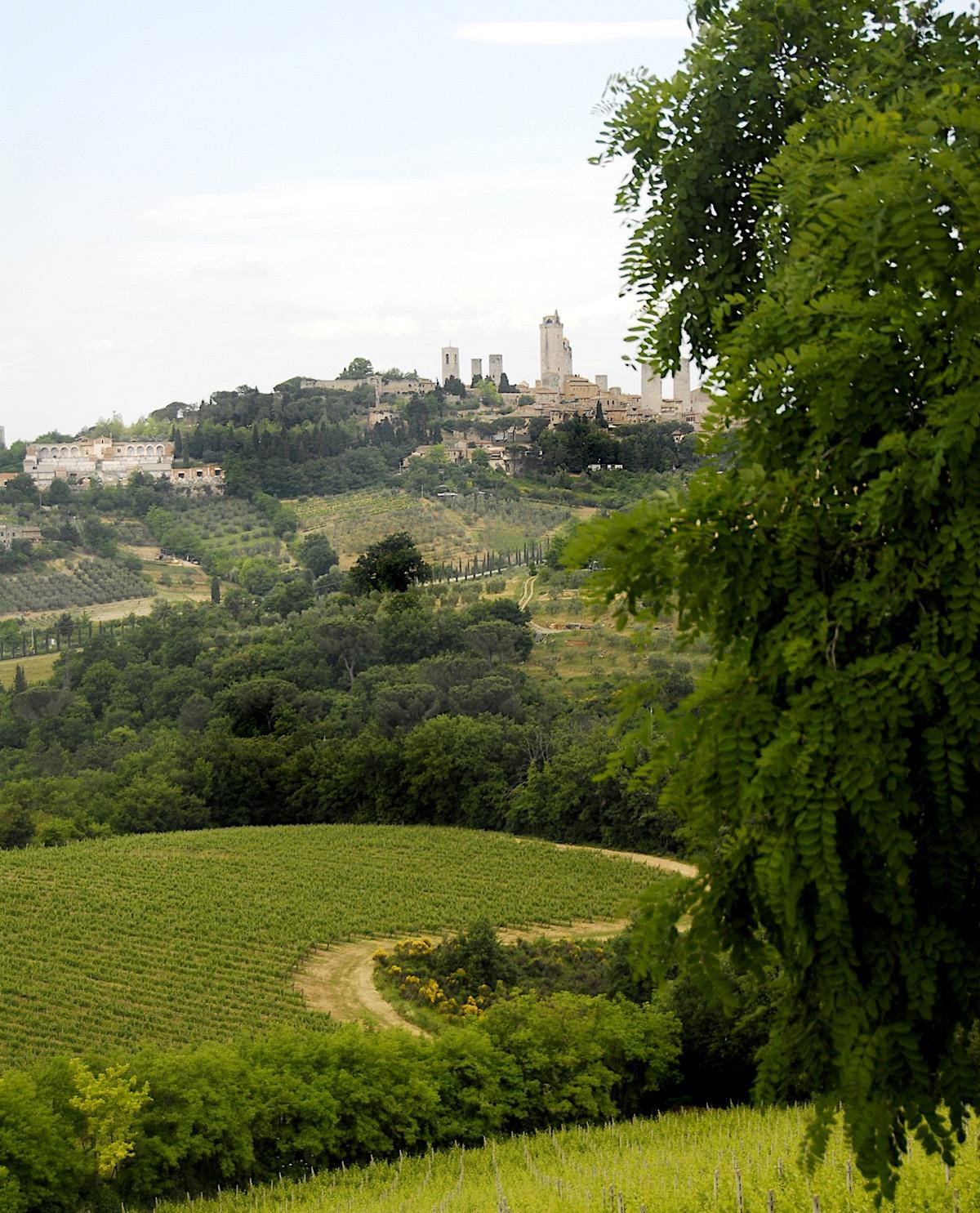 The earliest recorded mentions of Vernaccia di San Gimignano date back to the 13th century – © Consorzio Del Vino Vernaccia Di San Gimignano