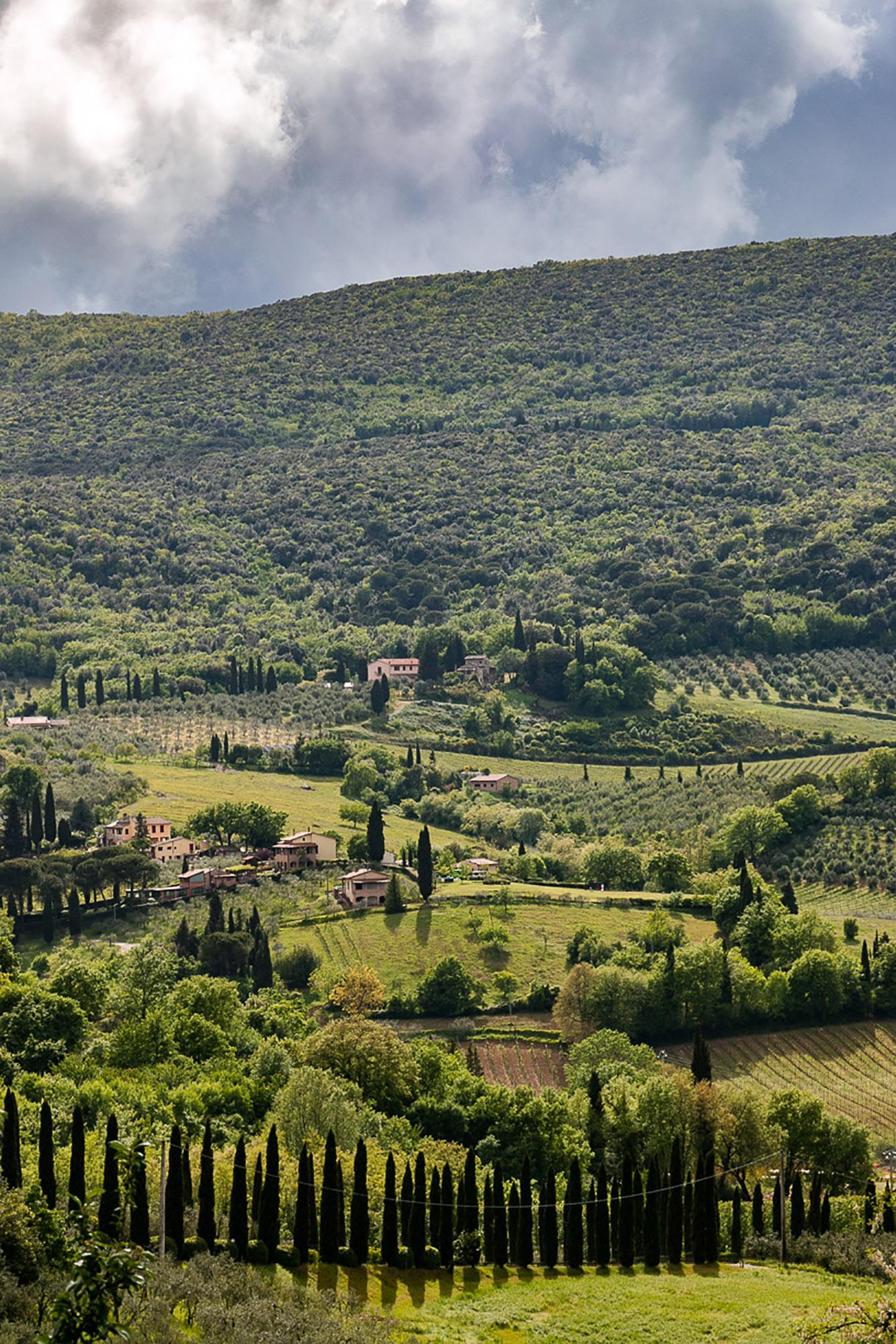 Wine yard, olive oil trees and cypress in San Gimignano countryside. This is simply Tuscany. - © Tina Fasulo / Share your Sangi