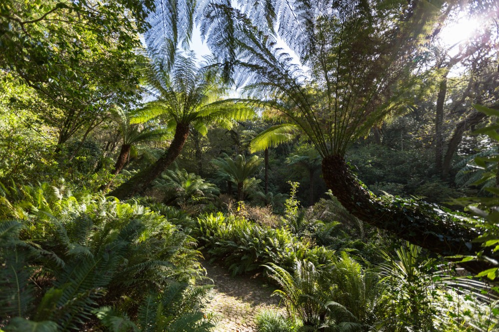 Along the paths of the Park of Pena, with collector's zeal, King Ferdinand II planted forest species native from every continent. – © PSML / EMIGUS