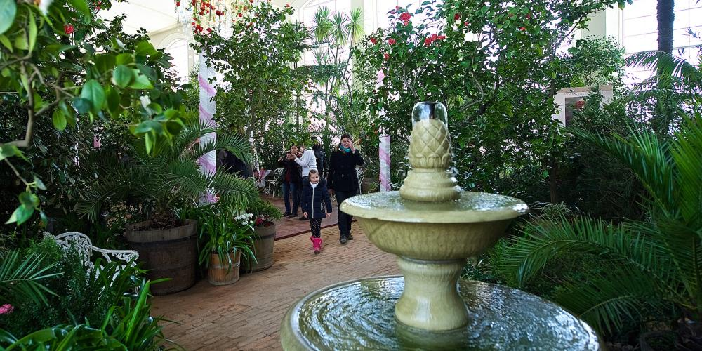 The major part of the Camellia collection is presented inside the Great Conservatory in the Flower Garden. – © Tomas Vrtal