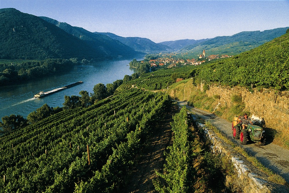 A perfect Wachau combination: well-preserved drystone wall terraces, enchanting villages—like Weißenkirchen—and the freely flowing Danube linking all the elements. – © Lois Lammerhuber / NÖ Werbung