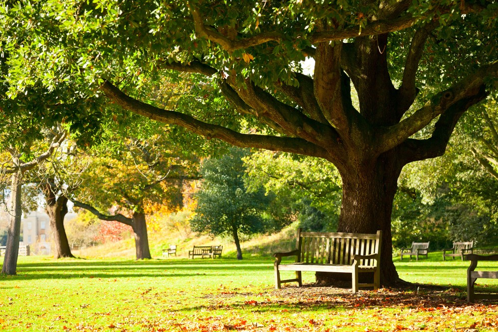 Take the opportunity to relax with a seat on a bench under a tree in the Royal Botanic Gardens. – © Dmitry Naumov  / Shutterstock