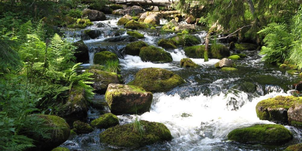 A brook in the ancient forest of Fulufjällets National Park. – © m.prinke / Flickr