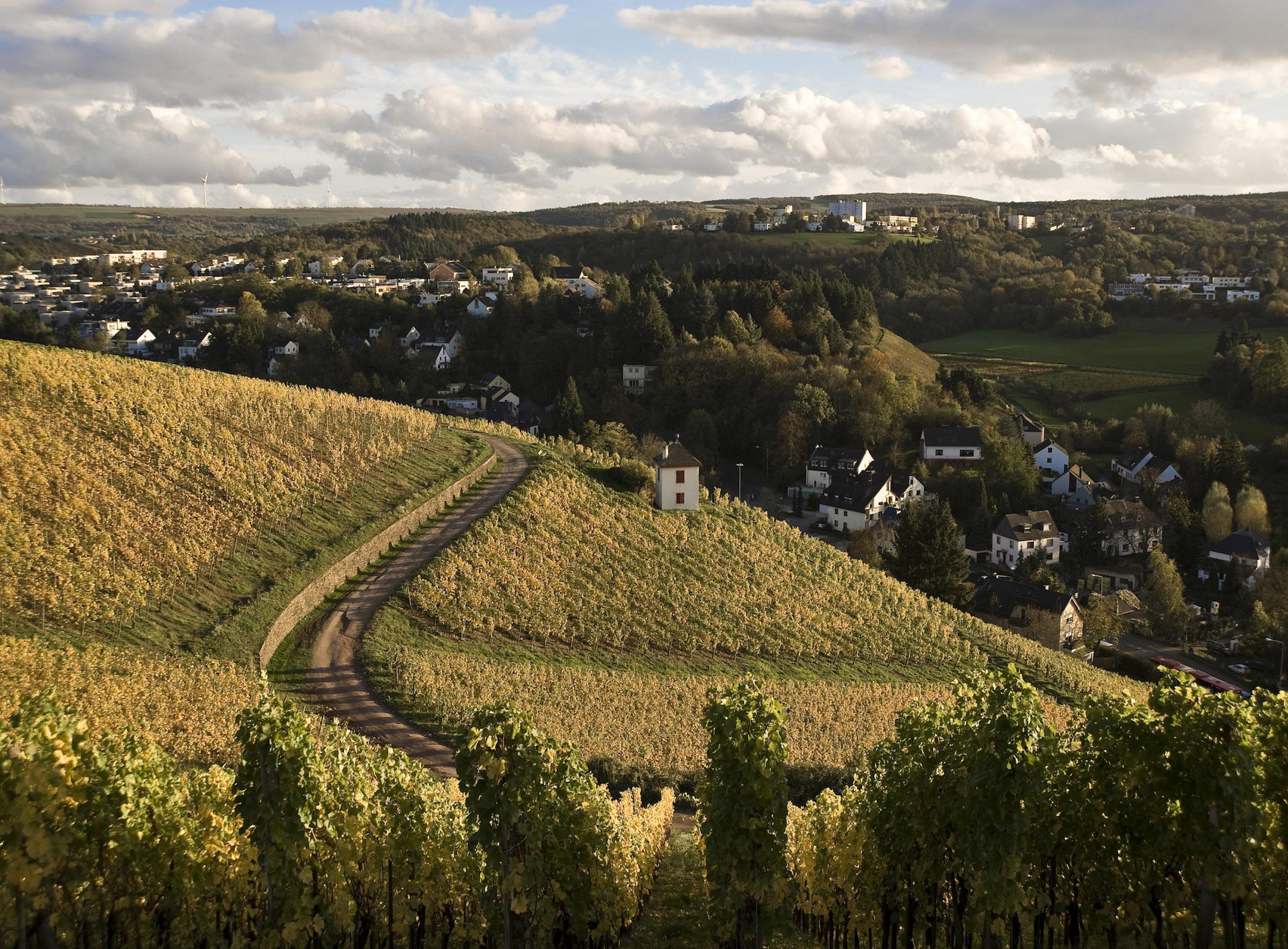 Trier may be loaded with history, but the wine from the Moselle River Valley vineyards transcends every epoch. © Trier Tourismus und Marketing GmbH