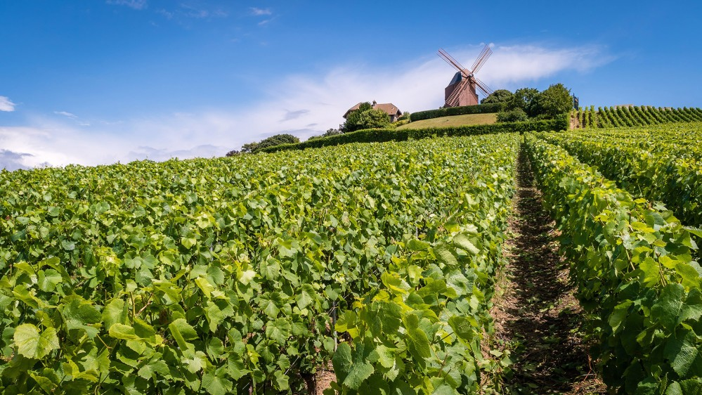 A windmill on a hill in the Champagne Region provides one of the many photo ops during a visit here. – © Stephane Debove / Shutterstock