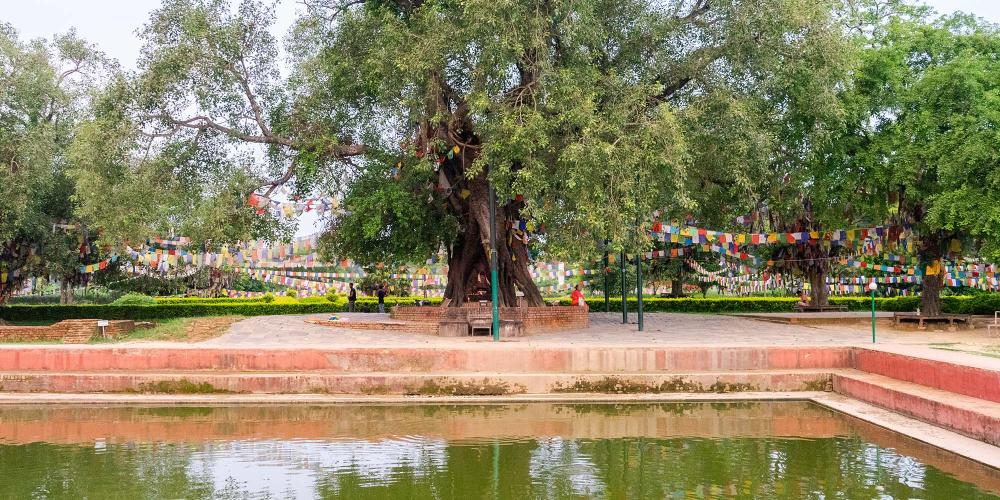 The Sacred Pond next to the Mayadevi Temple is believed to be the place where Buddha's mother, Queen Mayadevi, bathed herself before his birth. It is also where he received his purification bath. – © Michael Turtle