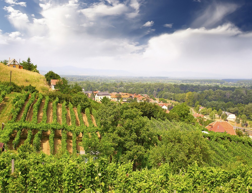 Vineyard and hills in Tokaj Region, where a distinct winemaking tradition has existed for more than one thousand years – © Pecold / Shutterstock