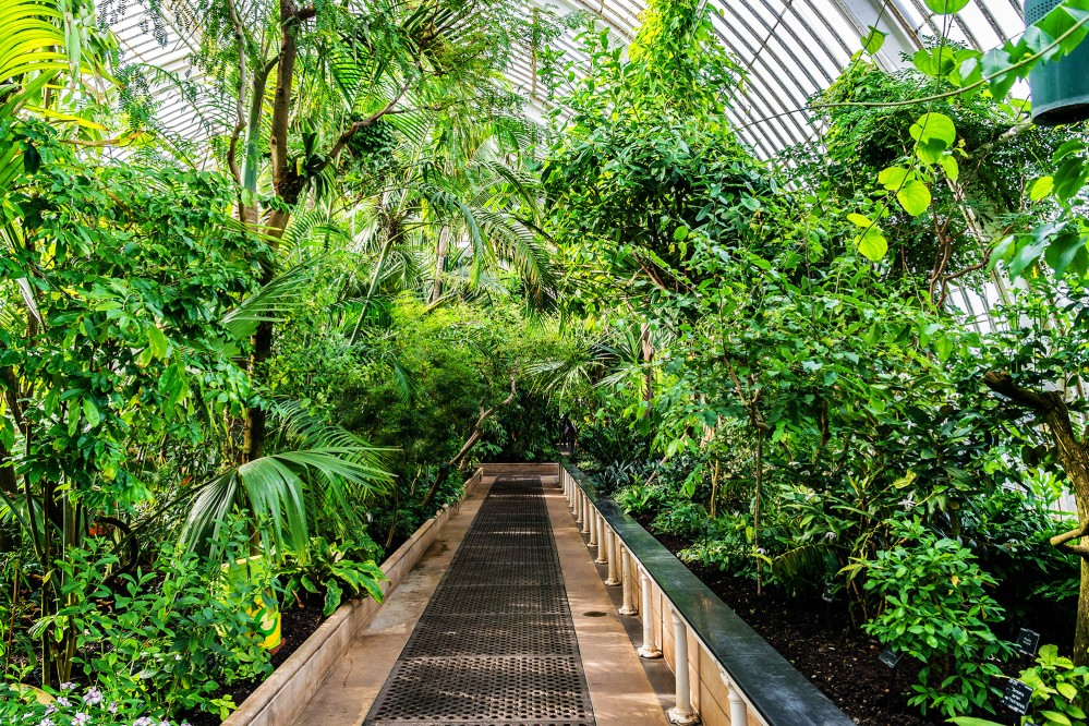 Palm trees in the Palm house. – © Kiev.Victor / Shutterstock