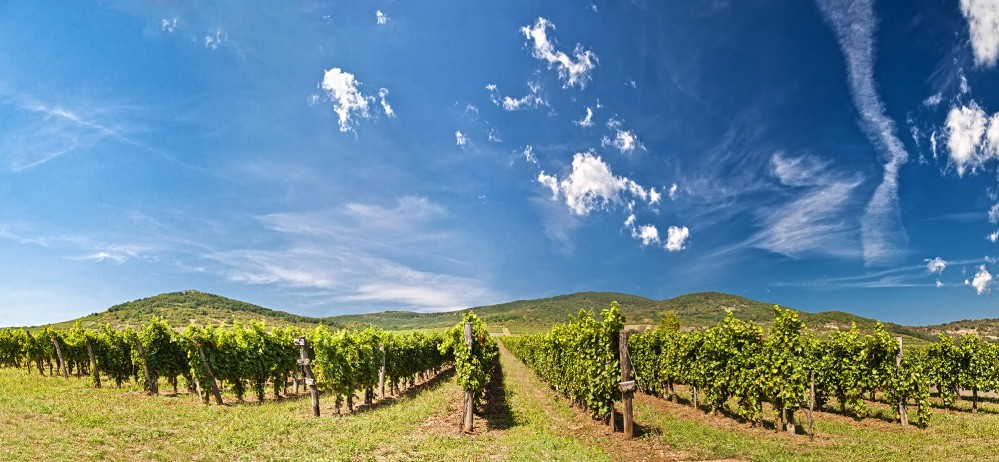 The Tokaj Region provides a perfect balance of beautiful panoramas and vineyard discovery. – © vitalez / Shutterstock