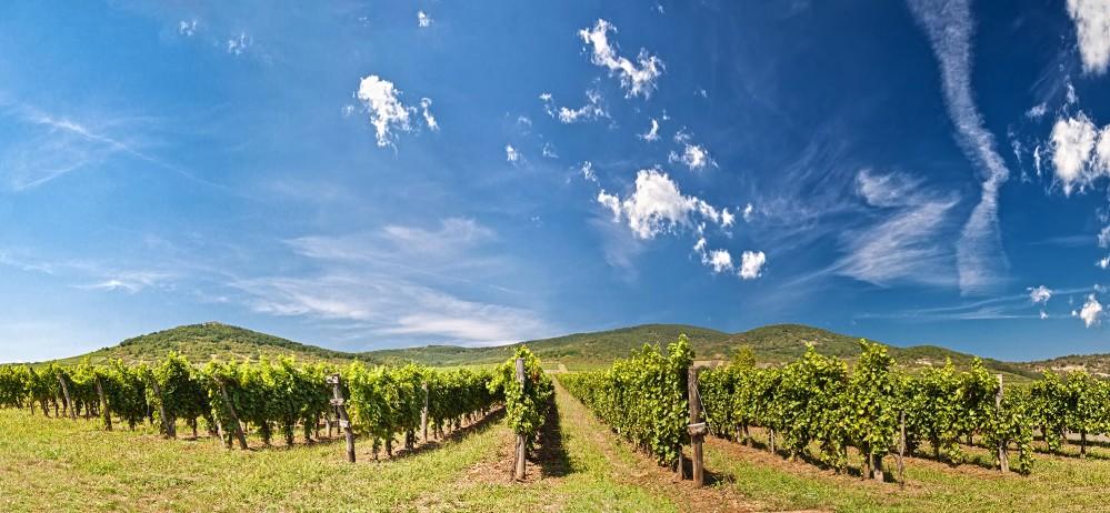 The Tokaj Region provides a perfect balance of beautiful panoramas and vineyard discovery. – © vitalez / Shutterstock