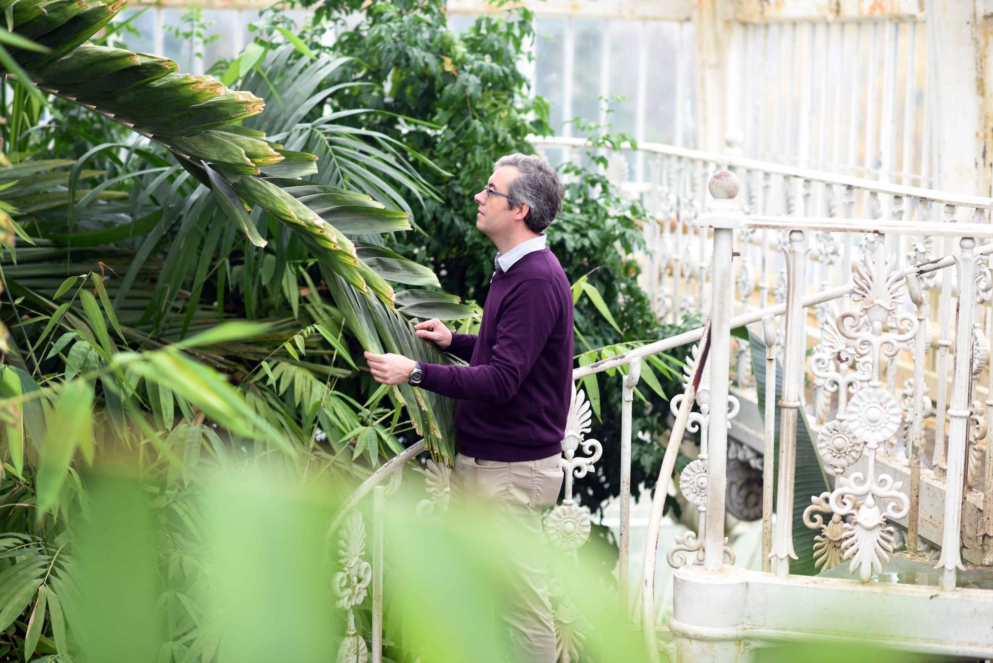 A scientist examines plants in the Palm House. - © Jeff Eden