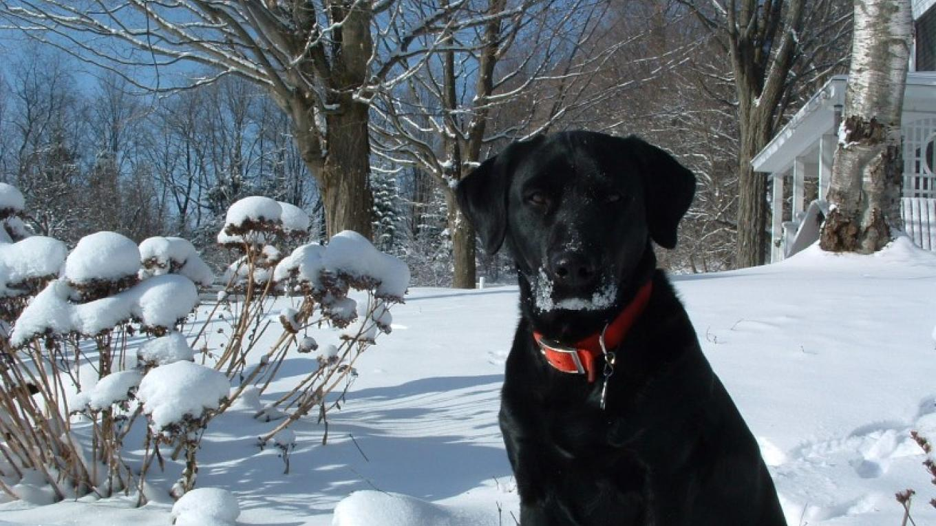 Frank's 1st Snow – Laura Coldwell