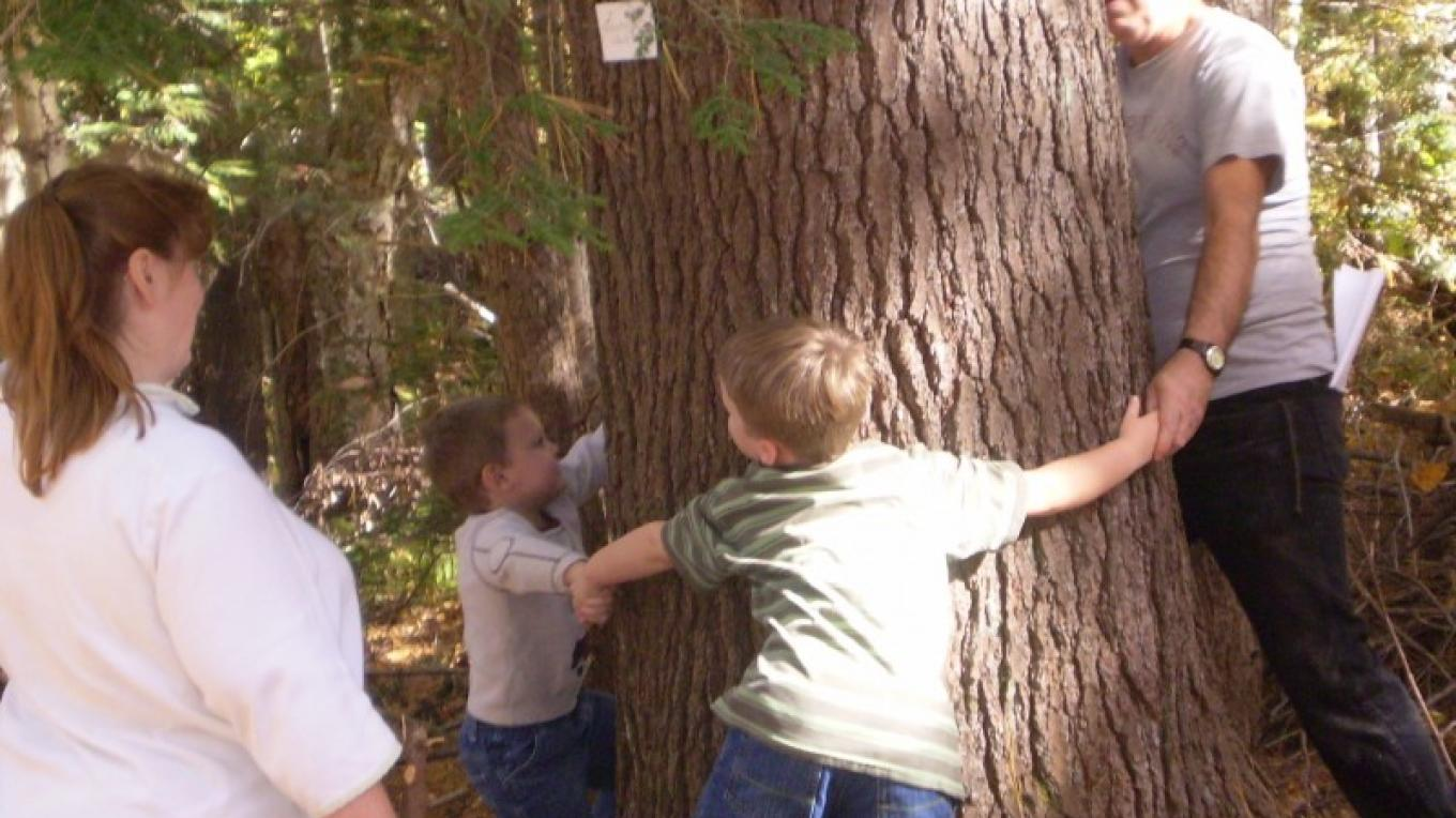 Checking out the size of this white pine during a Fall Farm Tours woods walk – Michele Dugan
