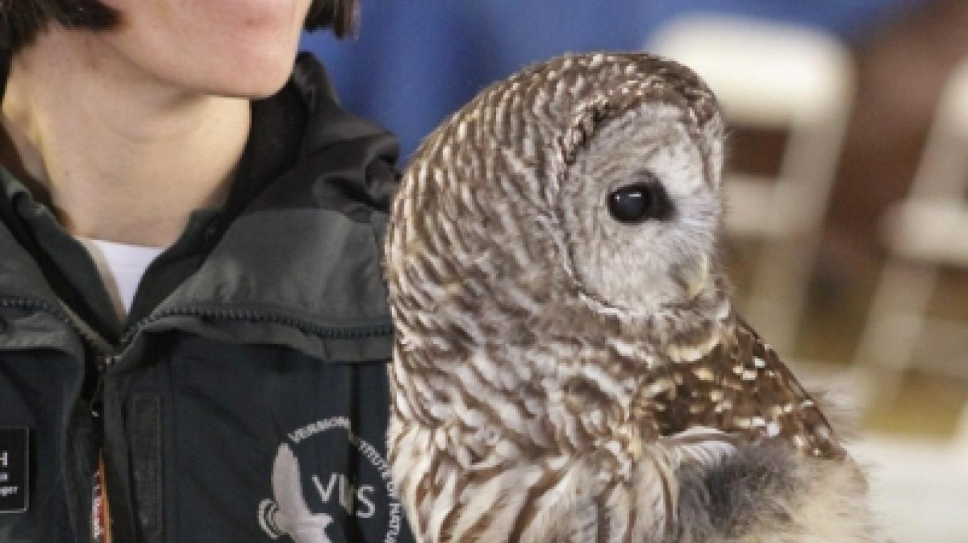 Hannah with Barred Owl – Cliff Oliver