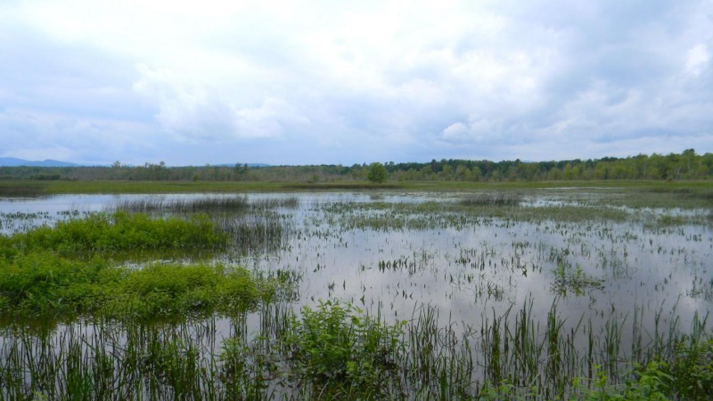 Ausable Marsh. – Adirondack Coast Visitors Bureau