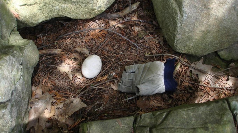 Bird's nest on Cole Island – Courtesy of Cathy Frank