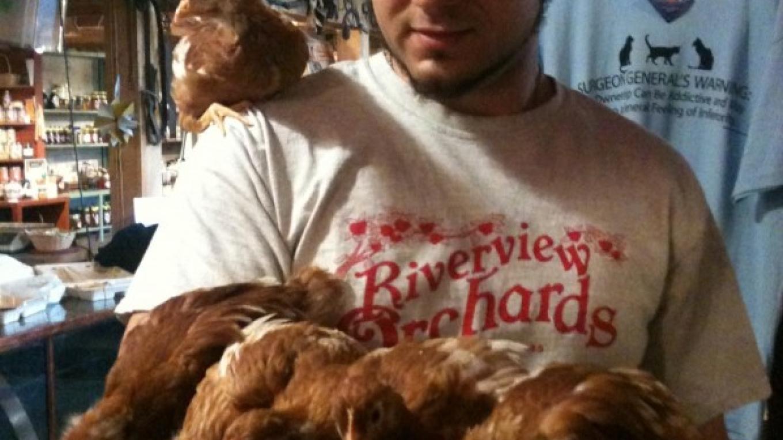 Chicken balance!
