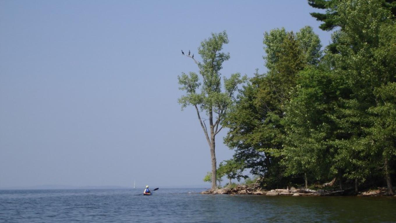 Cormorants at Schuyler Island. – Courtesy of Cathy Frank