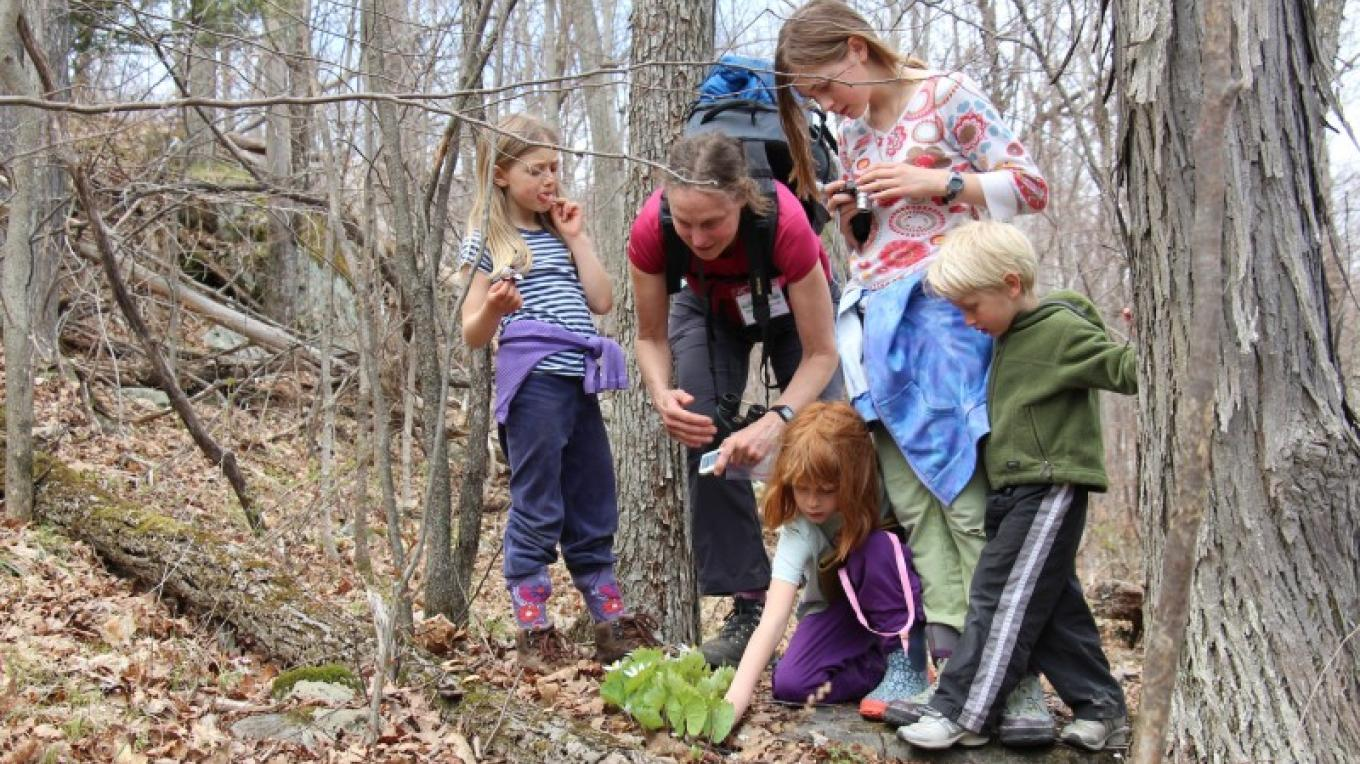 Boquet Mountain Trail is alive with spring wildflowers! – Jen Zahorchak
