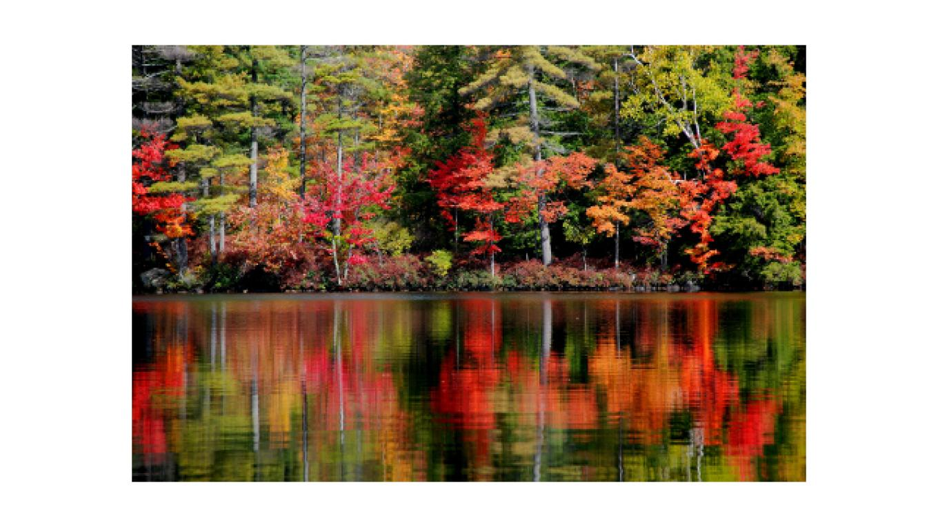 Brilliant fall foliage as seen from the boat or kayaks. – Mark Morgan
