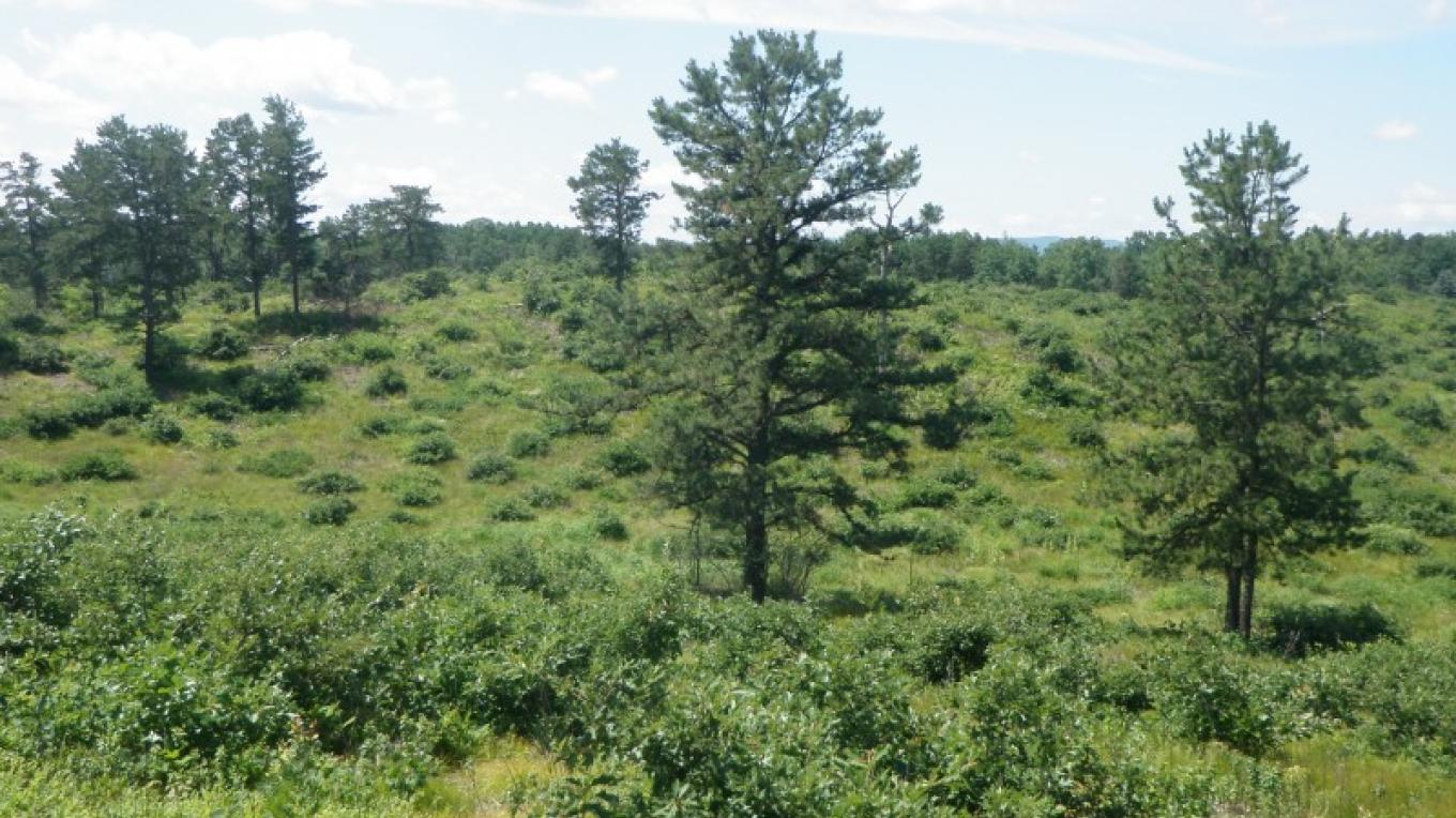 The 3,200-acre Preserve is predominantly defined by gently rolling sand dunes that support an extraordinary fire-dependent habitat. – Albany Pine Bush Preserve Commission