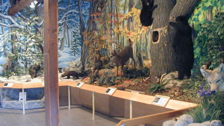 Museum interior – Matt Sprow