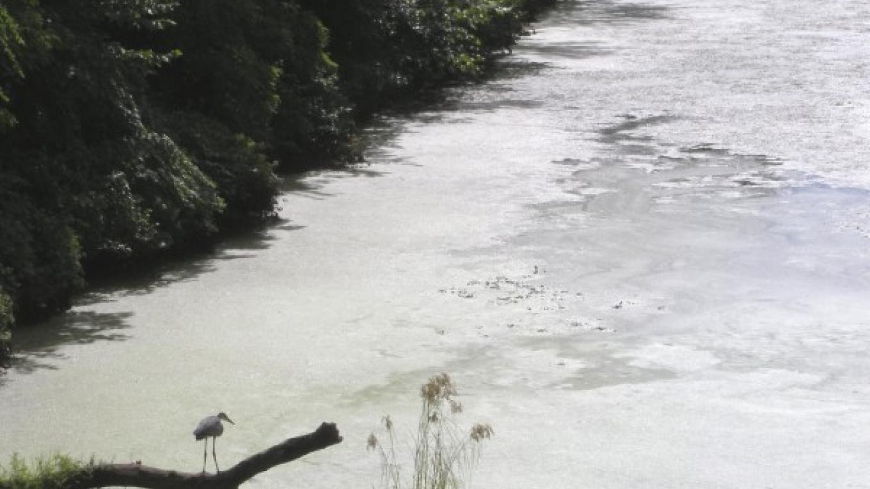 View of Great Blue Heron from Whipple Bridge – Myla Kramer