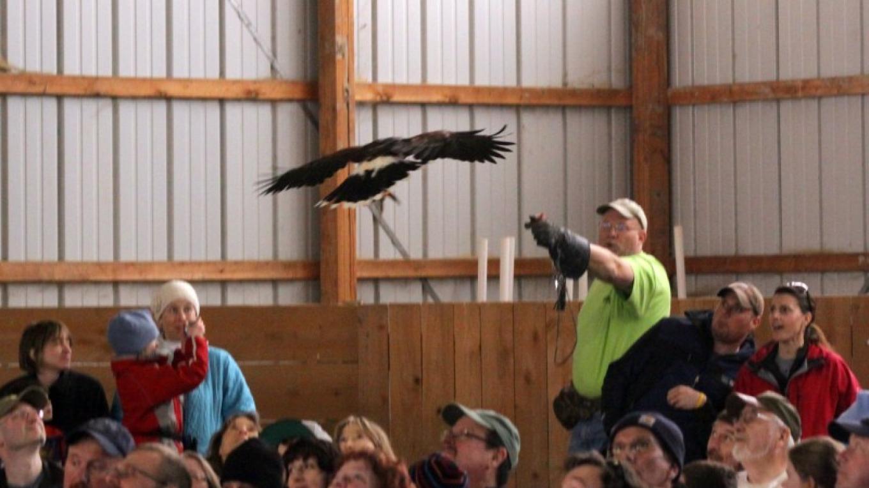 Adirondack Raptors – Cliff Oliver