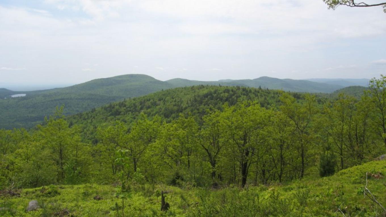 LakeGeorge Land Conservancy