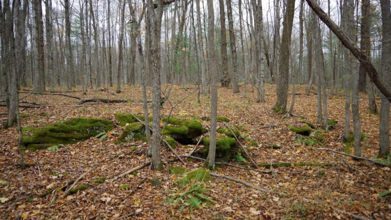 Florence Hathaway Park Nature Trail is a scenic lowland forest perfect for an afternoon stroll – Chris Maron