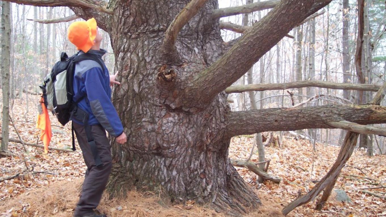 Historic trees – Elizabeth Lee