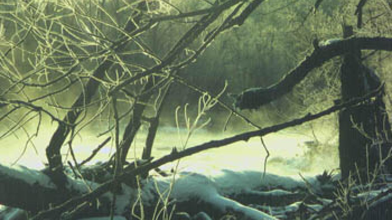 Pember Nature Preserve