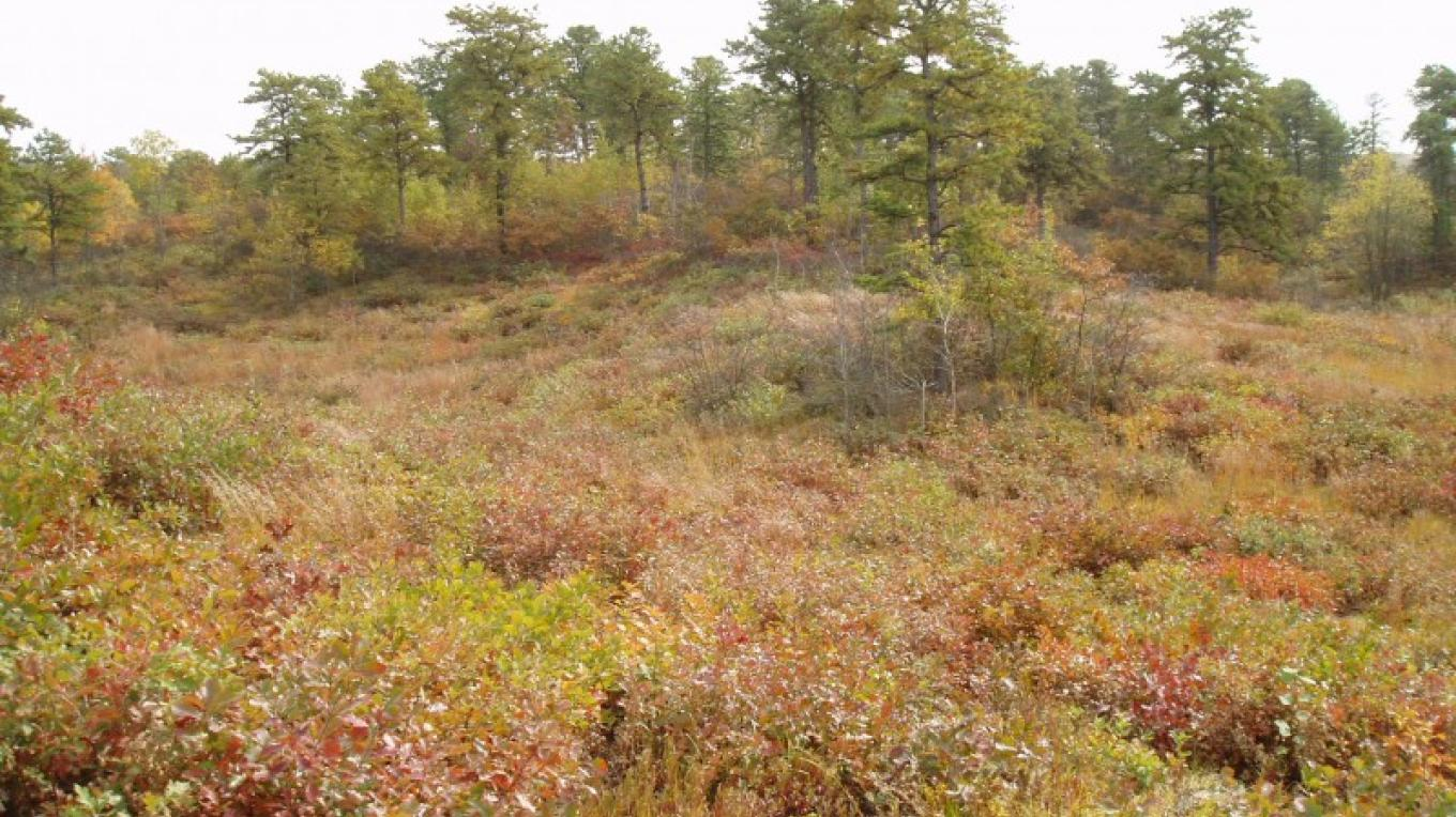 Located within New York's Capital District, the Albany Pine Bush Preserve is one of only twenty inland pine barrens left in the entire world and widely considered to be the best example. – Albany Pine Bush Preserve Commission