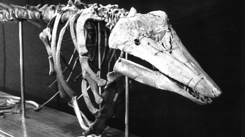 Monster Bones – University of Vermont Geology Dept.