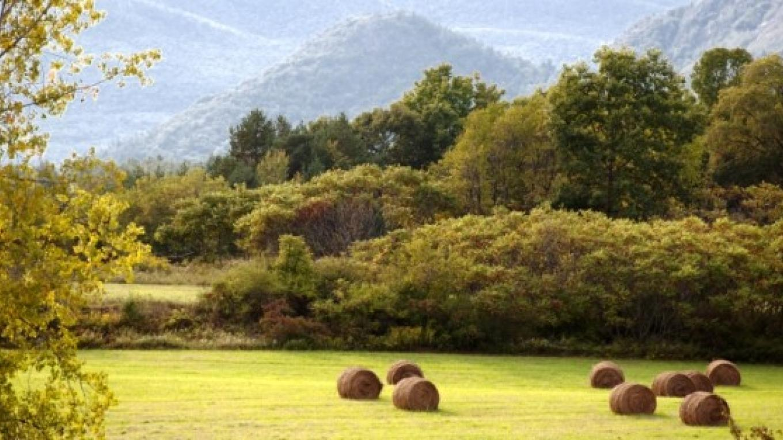 Juniper Hill Farm