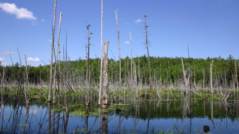 Lake George Land Conservancy